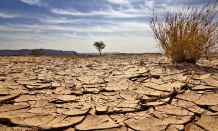 2017 a été la deuxième année la plus chaude enregistrée